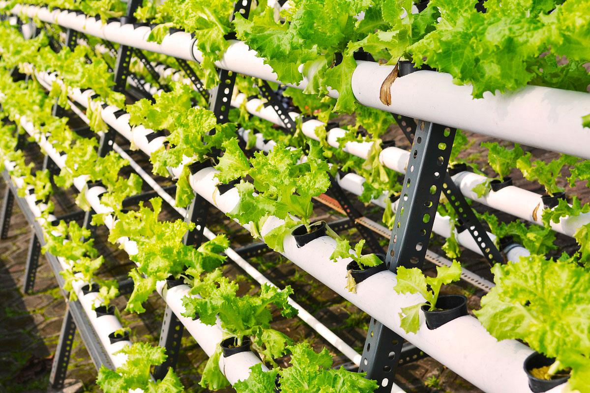 le nuove serre idroponiche per innovare l'alimentare